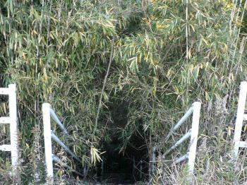トトロの穴