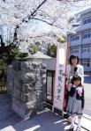 201104163sakura.jpg