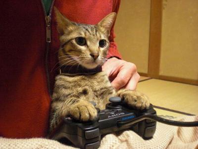 ゲームする猫?