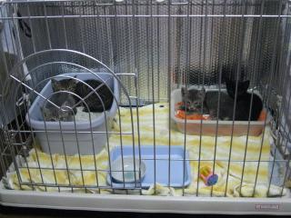 4匹の子猫1