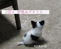 1108a_20081202004522.jpg
