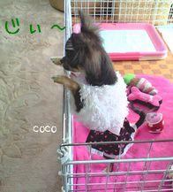 20081207cocoji.jpg
