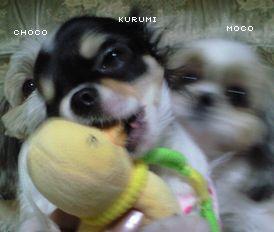 20090111chomoku.jpg