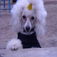 2009-1-10-ローラ16