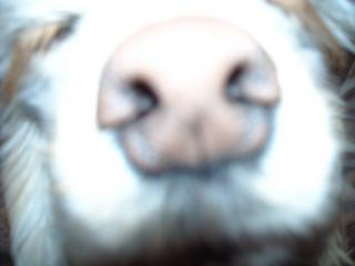 2009-1-6-豚バナ1