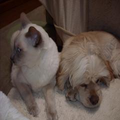 2009-1-7-キキとバレ2