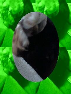 20090117010826.jpg