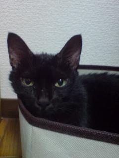 女の子の黒猫