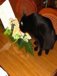お花をクンクン桃太郎