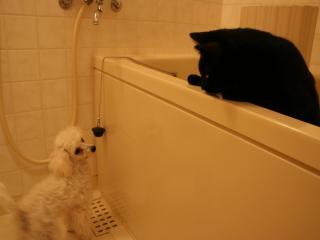 お風呂場で遊ぶ桃太郎とローラ