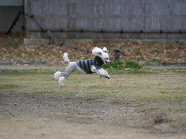 ローラ 跳んでいますよ ジャガーみたい2