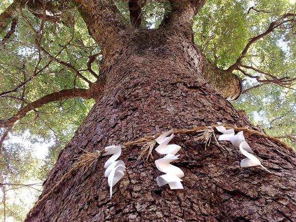 御神木に新しい御幣