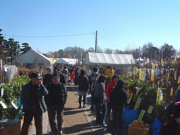 春の農協植木市