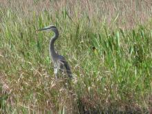 Everglades_6