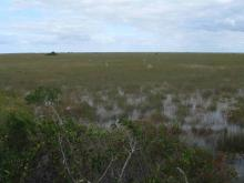Everglades_8