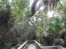 Everglades_9