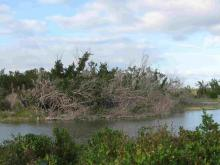 Everglades_11