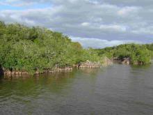 Everglades_10