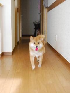 tsuki9112.jpg