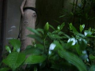 CIMG1018_20100620121346.jpg