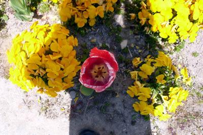 小学校の花壇