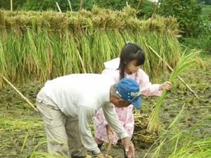 稲刈り遠足