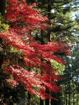 きのこ茶屋の紅葉