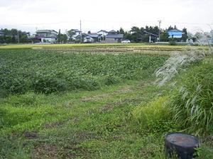 0909-25大豆