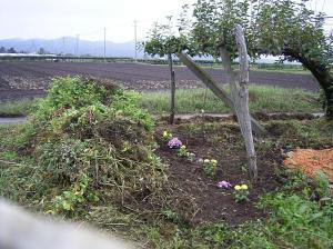 0909-29ぶどう畑の花