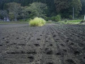0910-14南部小麦3jpg
