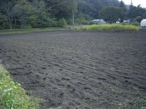 0910-14南部小麦2
