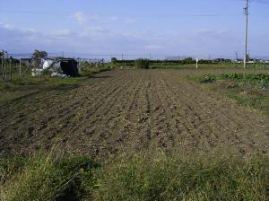 0910-13黒小麦