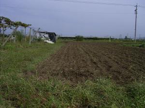 0910-5黒小麦