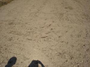 0910-24南部小麦ばら撒き