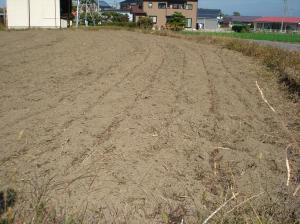 0910-24青刈りライ麦