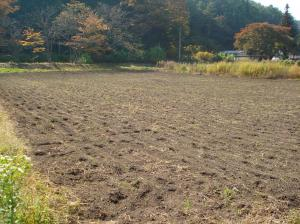 0910-24南部小麦