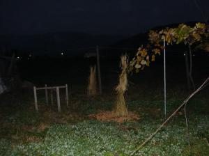 0910-29果樹2