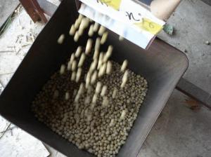 0911-8大豆
