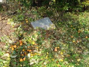 0911-9干し柿