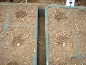 2010-2-26トマト・なす苗つくり