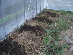 2010-3-3ハウス栽培準備