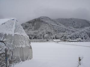 2010-3-8春雪