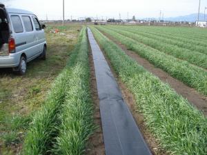 2010-4-9ライ麦畑