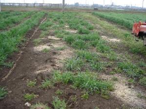 2010-4-21畑