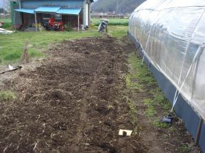 2010-4-29ひまわり1