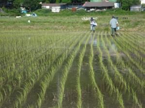 2010-6-17田んぼ