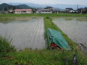 2010-6-18田んぼ6