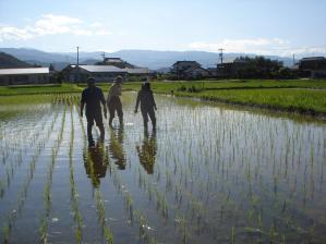 2010-6-24田んぼ