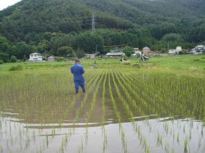 2010-6-25田んぼウォーキング