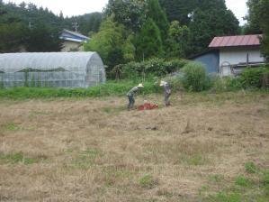 2010-7-16かえで農場大豆5